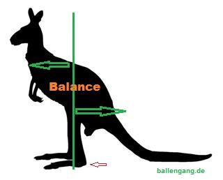 ballengang_kangoroo_balance